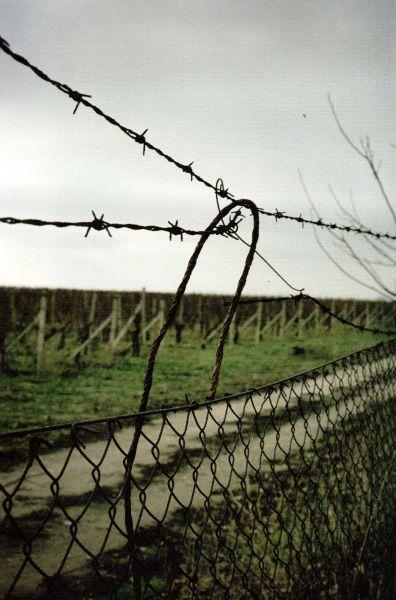 Questa immagine ha l'attributo alt vuoto; il nome del file è Cortina-Ungheria-1-1.jpg