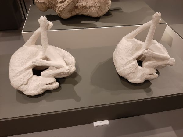 Questa immagine ha l'attributo alt vuoto; il nome del file è Pompei-Santorini-15.jpg