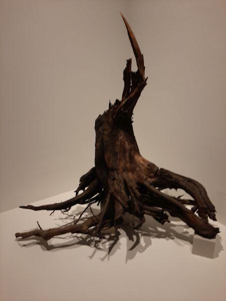 Questa immagine ha l'attributo alt vuoto; il nome del file è Pompii-Ult-albero.jpg